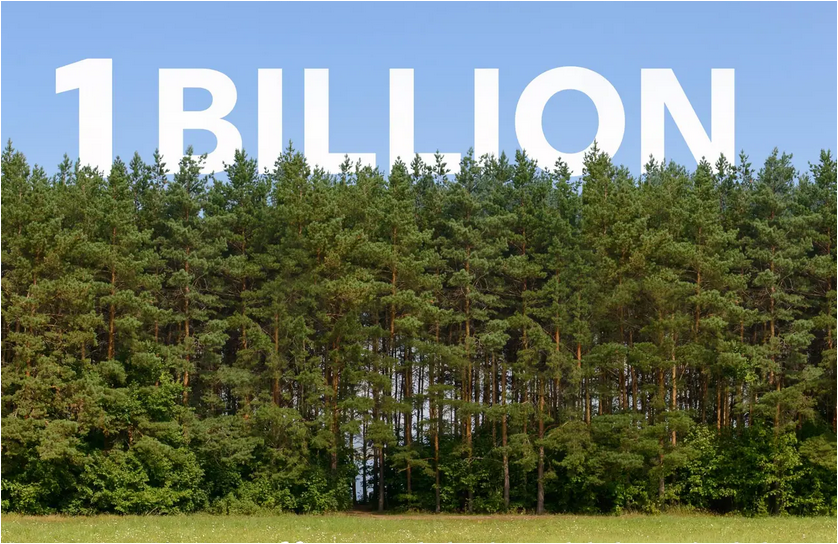UK needs to plant 1 billion trees by 2030